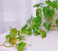 Plant_5002-sm