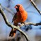 Birds14_Jan14_087_eds