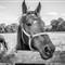 Horse farm 20120820 35
