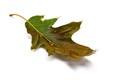 2020-07-16-16-24-58_Leaf