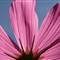 Flower IMG_8085
