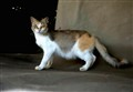 DSC_7110 cat