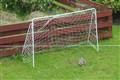 Rabbit Goal