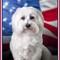 PiX_dog