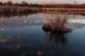 Natural Wetlands