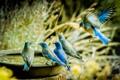 Scrub Jay Birdbath-6213