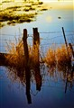flooded pasture 1
