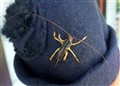Weta, which was hiding in the hat