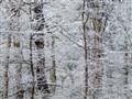 Silver winter