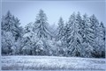 Winter in the Hochtaunus-Area (Germany)