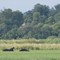 01-30-25 Hippos
