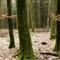 L1003252--11.4.-10-Beschenhof_130-MP-36A-7x11-30-f0-col