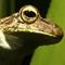 Frog09x