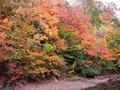Photo of fall foliage on the C&O Canal in Maryland during early November.