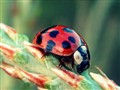 Fran The Ladybug
