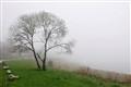 fog_AA66332