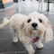 2017-01-30 Australia Melbourne Street Dog