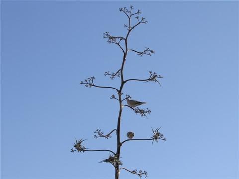 twig & birds