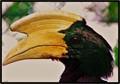 H for Hornbill