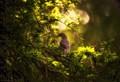 Bird in a tree....