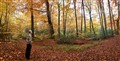 Autumn_forest_panorama