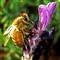 Bee2 sm