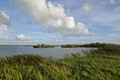 Wetland near Skjern, Denmark