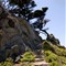 9296-Point Lobos-CC-2-E