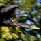 Cormorant 5 102912
