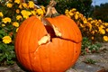 Was Humpty-dumpty a pumpkin?