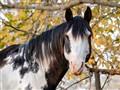 Horse2012
