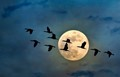 Cormorants and Moon