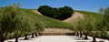 This image is of Hart Hill at the Niner Winery in Paso Robles, Ca.