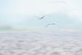 Cranes in Agamon Hula
