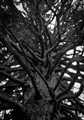 Dark Branches