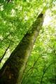 California Ohio nature preserve