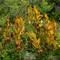 Grand Mesa Fading Plant