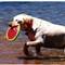 Doggie playtime Lake Tahoe