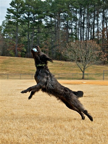 willow_jumping2