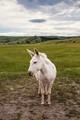 Not so wild, wild donkey