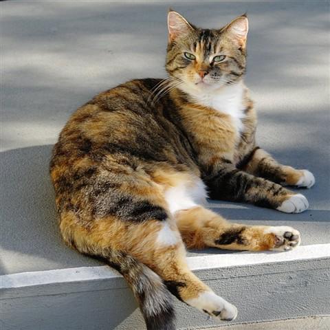 Cleo in sun