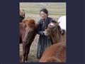 Mongol horse herder