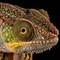 reptiles g80 20180224 0385RWAA