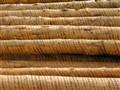 Debarked pine logs