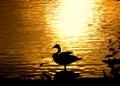Crane Creek Park Duck...
