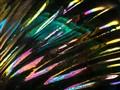 Dazzle P7260431 dp getinclose