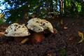 Spa mushroom