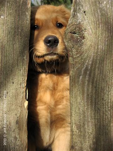 Bonnie's Dog