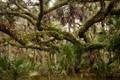 Florida forest in Orlando Wetlands Park
