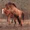 stallion rearing